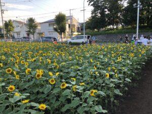 町田の横田農園
